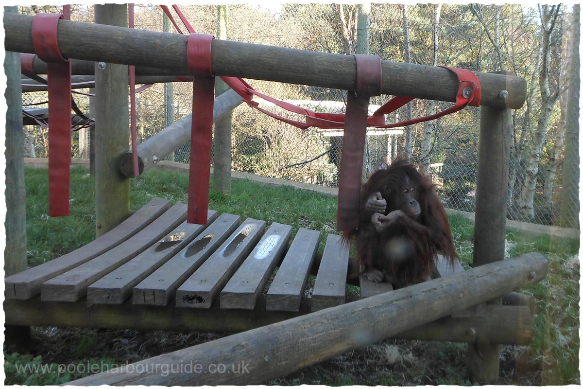Monkey world dorset kids play area sciox Images
